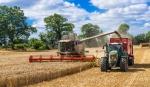 Mhdrescher und Traktor mit Ladewagen bei der Getreideernte - 289